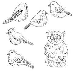 vector hand drawn birds