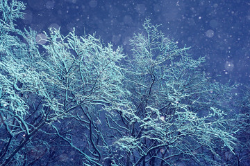 Winter night background snowy branches