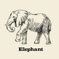 vector hand drawn elephant