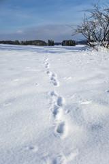 Animal foot prints in snow