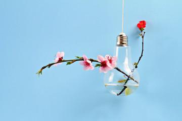 Springtime background. Gentle spring wedding flower decoration idea. Modern bulb vase with sakura flowers