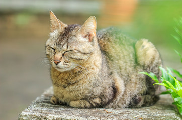 Stray cat / 野良猫