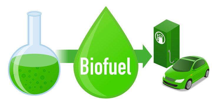 Biofuel: Biomass fuel from algae, diagram illustration