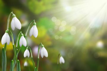showdrops shining in the sun