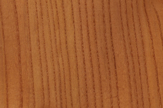 timber grain of Red Elm, Ulmus rubra,