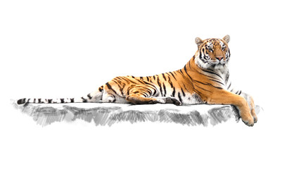 striped tiger, which lies on the rocks Wall mural