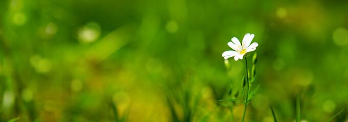 Photo sur Plexiglas Fleuriste Wild flower growing in a forest