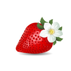 strawberries with flower. blooming strawberries