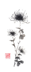 Spider chrysanthemums Japanese style original sumi-e ink painting.