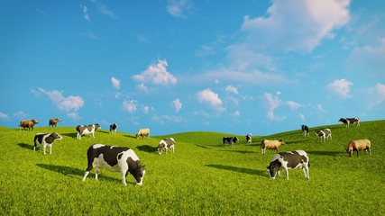 Wall Mural - Herd of mottled dairy cows graze on a green pasture under blue cloudy sky at spring day. Realistic 3D illustration.