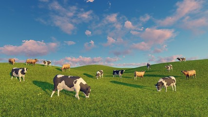 Wall Mural - Herd of mottled dairy cows graze on the open green meadows under sunset cloudy sky. Realistic 3D illustration.