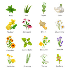 Medicinal  Herbs Plants Flat Icons Set