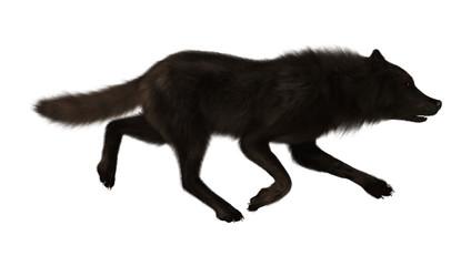 Black Wolf on White