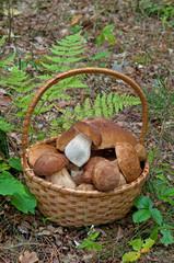 basket  with mushrooms