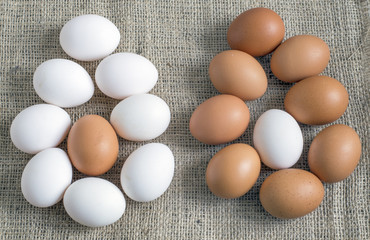 brown and white eggs chicken