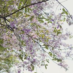 beautiful purple flowers blooming