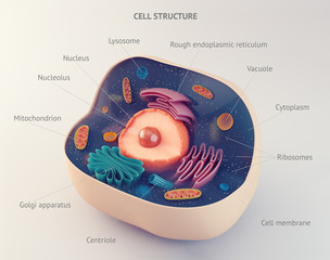 Anatomical structure of animal cell