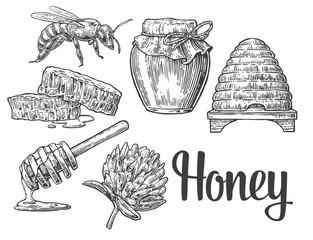 Honey set. Jars of honey, bee, hive, clover, honeycomb. Vector vintage engraved illustration.