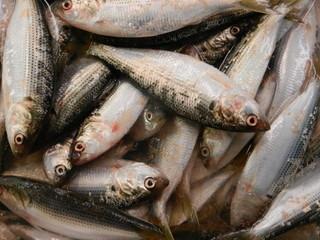 Group of fresh fish at japanese market.