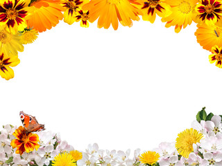 Frame from yellow and white flowers with a butterfly on a white background isolated
