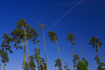 Trees blue sky