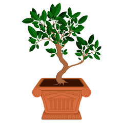 Little bonsai tree in brown pot
