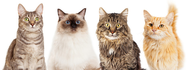 Four Happy Cats Website Banner