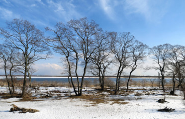 3月のウトナイ湖