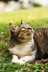 cute cat on nature background