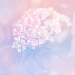 Nature element pink and blue boho style background