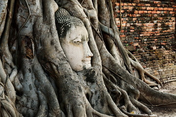 Head of Buddha Statue with the Tree Roots at Wat Mahathat, histo