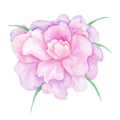 Watercolor Pink Peony Flower