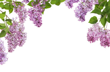 Printed roller blinds Lilac light lilac large inflorescences and leaves half frame