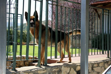 забор всегда граница