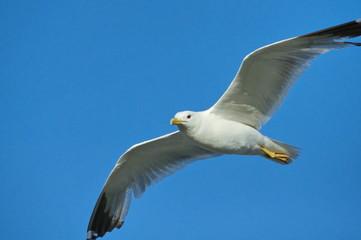 white seagull on blue sky