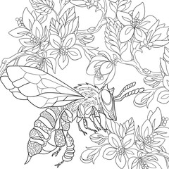 Zentangle stylized cartoon bee flying among sakura flowers. Sketch for adult antistress coloring page. Hand drawn doodle, zentangle, floral design elements for coloring book.