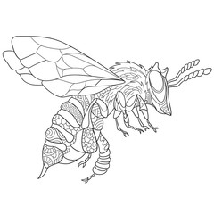 Zentangle stylized cartoon bee insect (bumblebee), isolated on white background. Sketch for adult antistress coloring page. Hand drawn doodle, zentangle, floral design elements for coloring book.