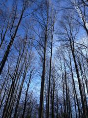 Bosque de hayas, Italia