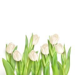 Tulips decorative background. EPS 10
