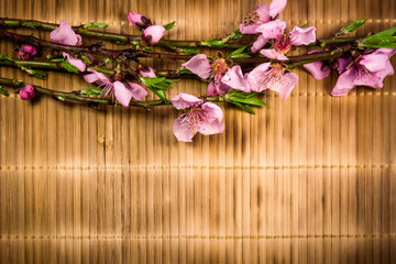 Branch with peach flowers on bamboo background
