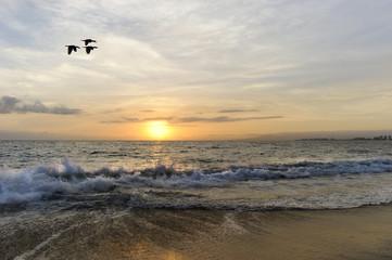 Sunset Birds Flying