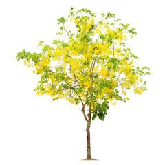 Wall Mural - Tree flower yellow, Tree image, Tree object, Tree JPG isolated o