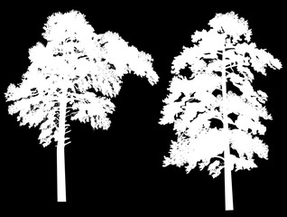 two large white pine silhouettes isolated on black