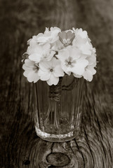 bouquet primroses in glass wine glasses on an old wooden board in the cracks. black and white photo