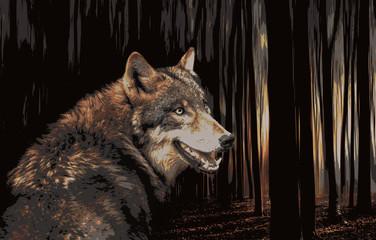 Der graue Räuber ist zurück - der Wolf in Deutschland