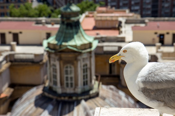 gull on the lookout above center of Rome