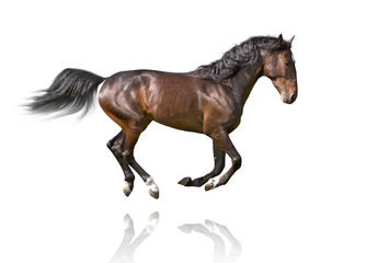 isolate of the brown horse galloping