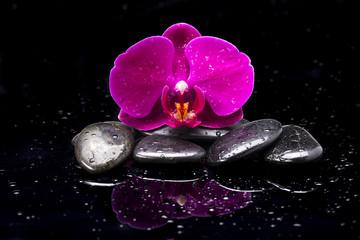 Fototapeta Storczyk i kamienie zen