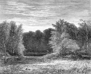 A forest on the edge of Lehigh, Pennsylvania, vintage engraving.