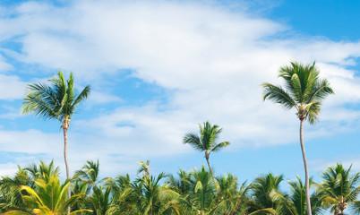 Palms, Dominican Republic